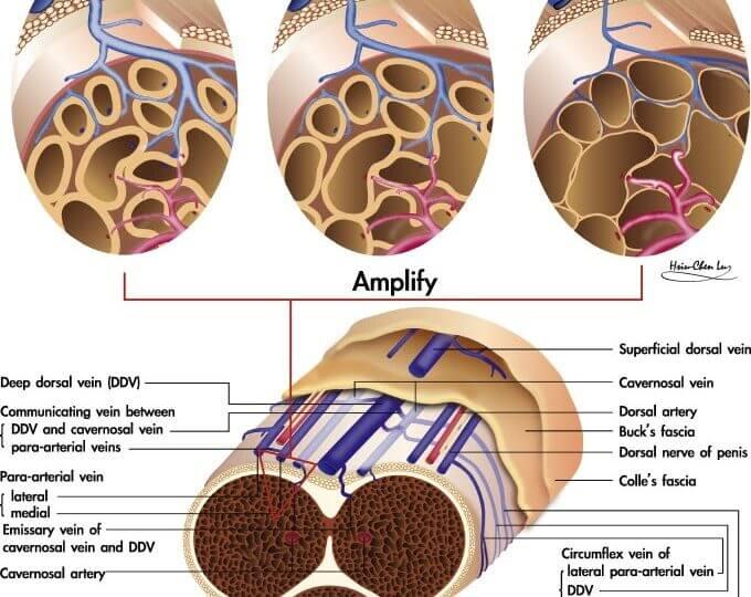 Nerve damage erectile dysfunction treatment